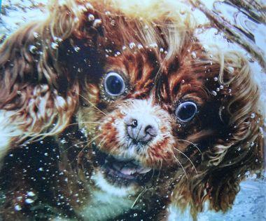 Seth Casteel book Underwater Dogs