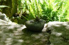 Bellevue Bot Garden