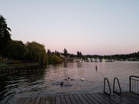 Evening swimmers Maydenbauer Bay