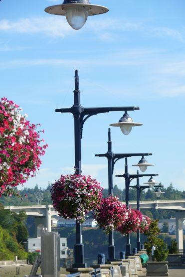 Washingtons hanging baskets - everywhere