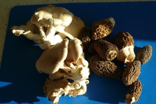 Oyster & Morel Mushrooms