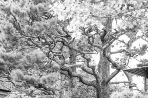 Japanese Garden Golden Gate Park